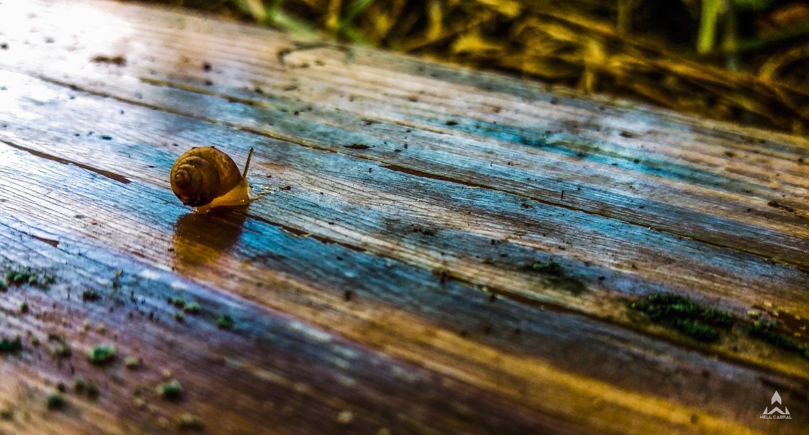 A snail on a bit of wood
